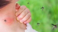 7 façons de se débarrasser des insectes dans votre maison qui fonctionnent réellement